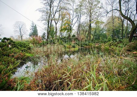 A Garden Small Pond With Shrubs And Lush Vegetation