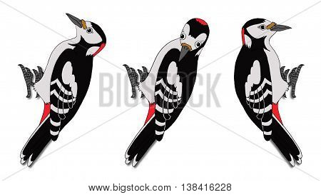 European Forest Woodpeckers. Digital painting full color cartoon style illustration isolated on white background.