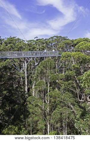 WALPOLE, WESTERN AUSTRALIA - APRIL 2, 2016: Two unidentified tourists enjoying the Tree Top Walk in the Valley of the Giants in Walpole-Nornalup National Park near Walpole, Western Australia.