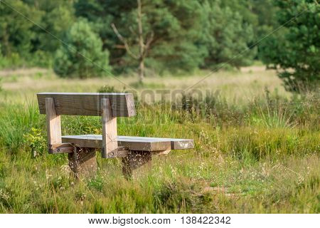 Wooden bench in the pine forest and grassland