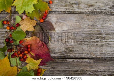 Autumn Maple Leaves And Apples