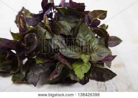 Basil on a light wooden background ,