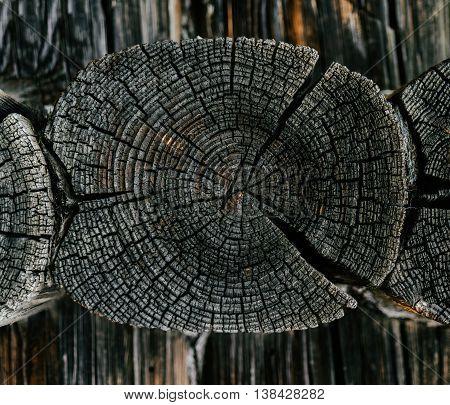 Horizontal vivid wooden felling detail bokeh background backdrop