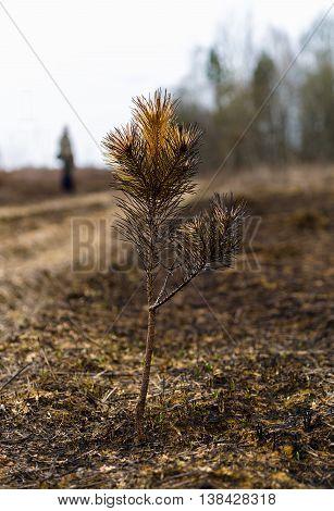 Vertical Autumn Fir Tree Offspring Bokeh Background Backdrop