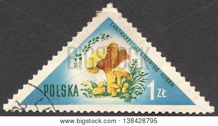 MOSCOW RUSSIA - CIRCA JANUARY 2016: a post stamp printed in POLAND shows a mushroom Cantharellus cibarius the series