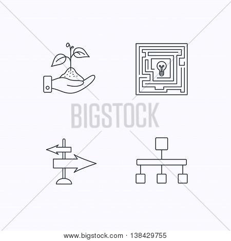 Hierarchy, save nature and direction arrow icons. Maze linear sign. Flat linear icons on white background. Vector