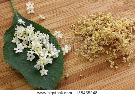 Sambucus nigra elderberry herb with flowers and dried flowers and leaf on wooden background.