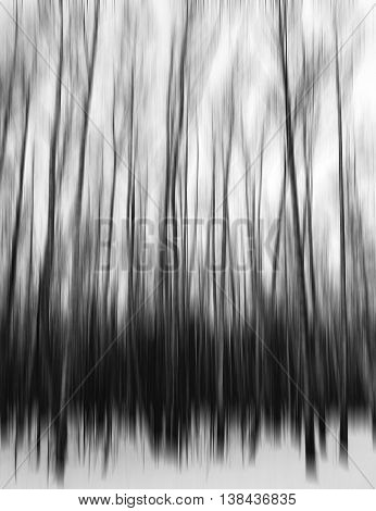 Vertical Black And White Motion Blur Trees Art Abstraction Backd