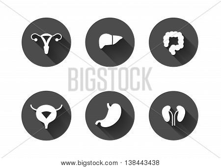 White long shadow human internal organs icons. Uterus, liver, colon, bladder, stomach and kidneys