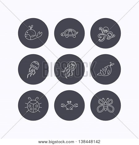 Octopus, turtle and dolphin icons. Jellyfish, whale and ladybug linear signs. Crab, butterfly flat line icons. Flat icons in circle buttons on white background. Vector