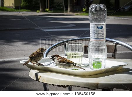 HELSINKI, FINLAND - JULY 11: Two sparrows looking for food in a cafeteria in Helsinki at July 11, 2016