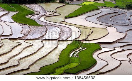YEN BAI, VIETNAM May 25, 2016 terraces, Mu Cang Chai high mountains, Yen Bai, pour water into the season
