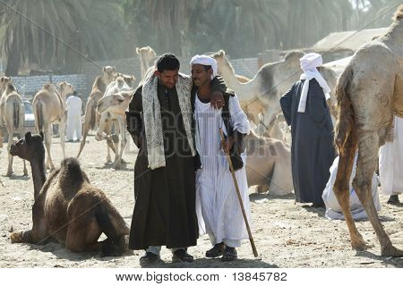 DARAW, EGYPT - DECEMBER 29: Arab people are bargaining at weekly camel and livestock market on December 29, 2009 at Daraw town near the Aswan, Egypt.