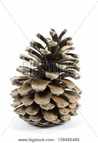 Dried Pine Cone seeds on a white background