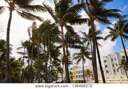 Miami Beach Ocean boulevard Art Deco district in florida USA Palm trees