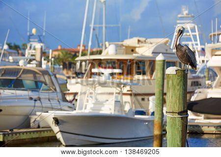 Fort Lauderdale Pelican bird in marina pole at Florida USA