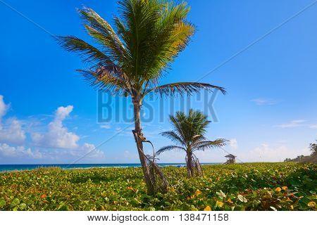 Del Ray Delray beach in Florida USA palm trees in the shore