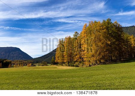 Autumn landscape with field and larch trees. Miemenger Plateau Austria Tyrol.
