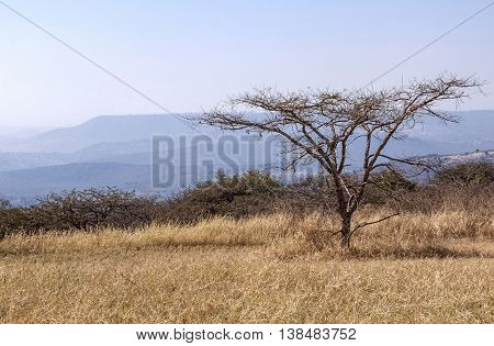 Winter Grass Tree And Skyline On Hilly Rural Landsacpe