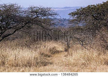 Close up of dry arid grass and bush vegetation on winter landcsape in South Africa