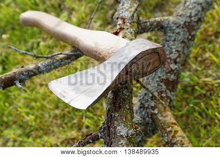 Ax And Branches Of Old Trees On The Grass