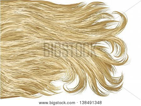 blonde hair isolated on a white background