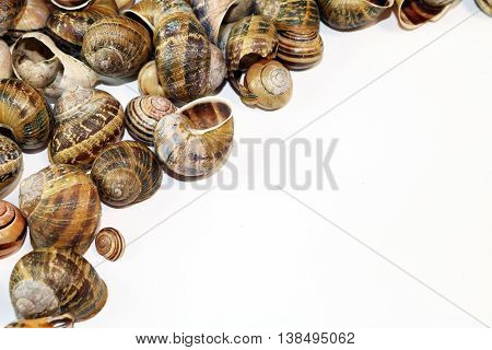 Snail Shells isolated on a white background