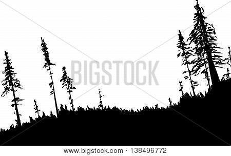 Swedish Forest Background Outline
