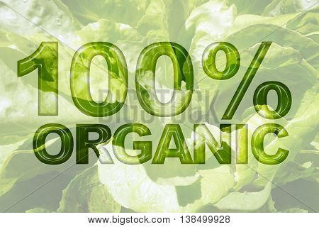Romaine lettuce green vegetable texture background with word 100% Organic