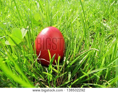 Red easter egg in bright green grass