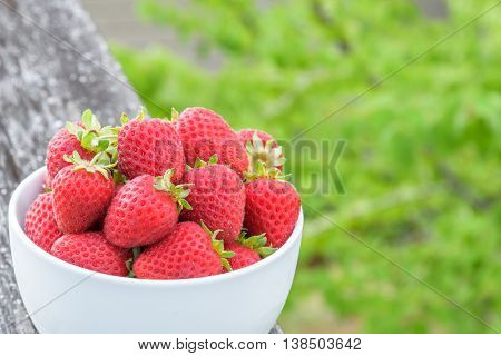 Fresh picked strawberries in white bowl on a wood railing