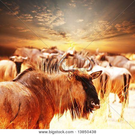 antelope gnu crowd