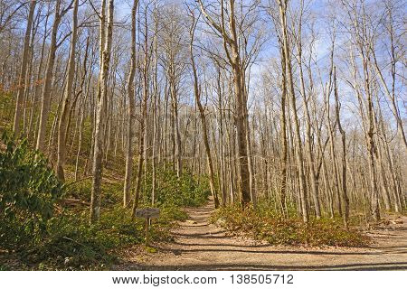 Mountain Trail on a Spring Day in the Great Smoky Mountains in Tennessee