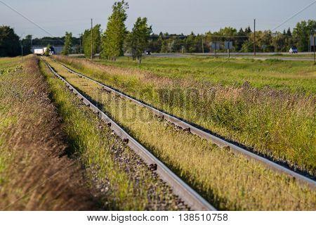 Spilled grain is growing between the rails of prairie train tracks