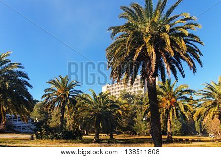 city park with palm trees on a sunny day Abkhazia