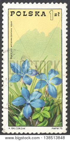 MOSCOW RUSSIA - CIRCA JANUARY 2016: a post stamp printed in POLAND shows a spring gentian (Gentiana verna) flower the series