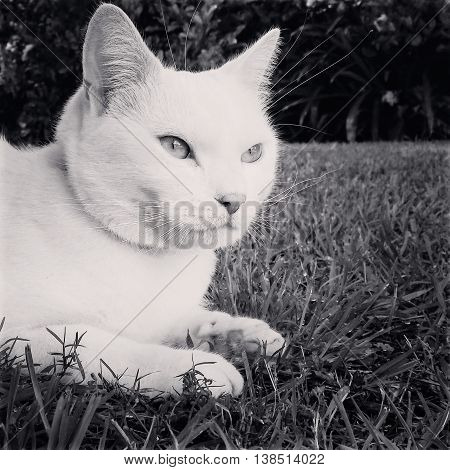 Pure White Cat Sitting in the Grass