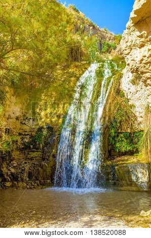 The mountain river in Ein Gedi oasis flows through the high rocks forming waterfalls on its way Israel.