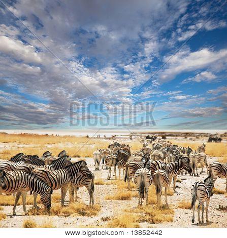 zebras no poço