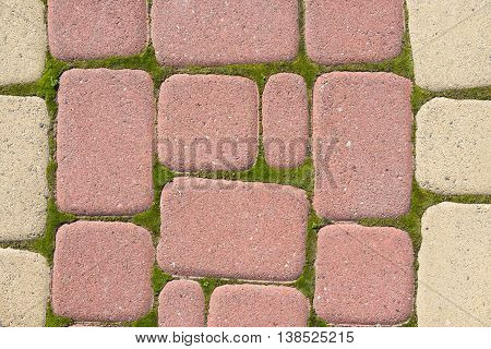 The Sidewalk pavers around a sprouted moss