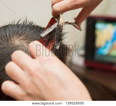 professional hairdresser doing hair cutting for a boy