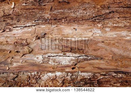 Texture of the tree bark on the reverse side. The background of natural inner red bark. Soft leather trees.