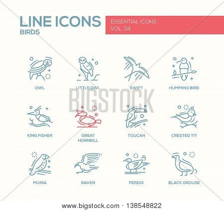 Birds - set of modern vector plain line design icons and pictograms of animals. Owl, swift, humming bird, king fisher, great hornbill, toucan, crested tit, munia, raven, perdix, black grouse