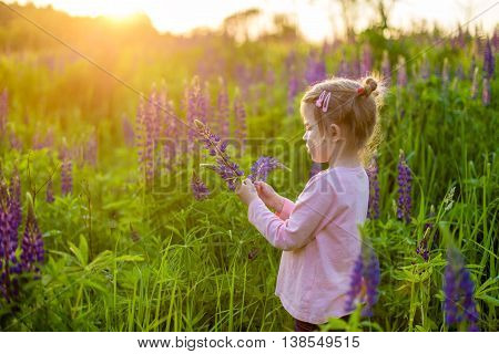 girl collects flowers on the field on the sunset