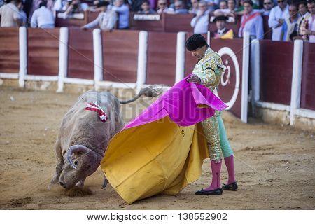 Ubeda Spain - September 29 2010: The Spanish Bullfighter Manuel Jesus El Cid bullfighting with the crutch in the Bullring of Ubeda Spain