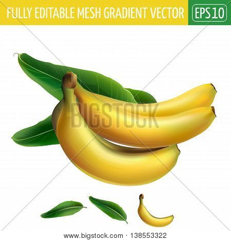 Banana with leaves. Isolated illustration on white background.