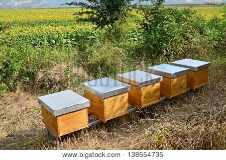 Beekeeping and honey production. Small - family business in east Europe
