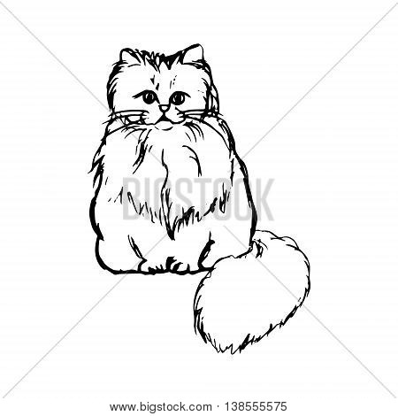 Abstract drawing of a fluffy cat graphic vector illustration