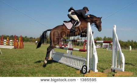 Showjumping Competor Practicing Showjumping.