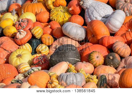 Close up from Many different colored pumkins
